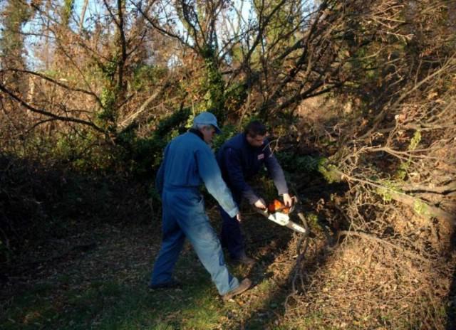 Poginuo pileći drva u šumi kraj Snašića