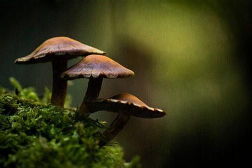 Ovog vikenda izložba gljiva