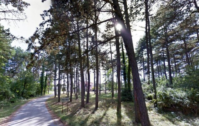 Hrvatske šume i Općina Sveta Nedelja postigle dogovor oko sječe borove šume oko Malih Golji