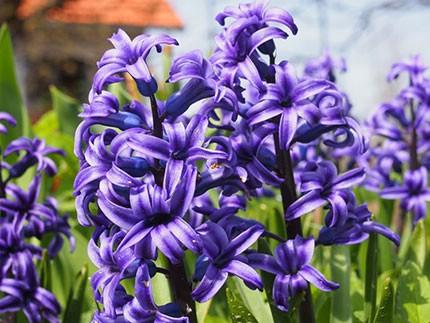 Sajam cvijeća Labin, 21. i 22. 4.