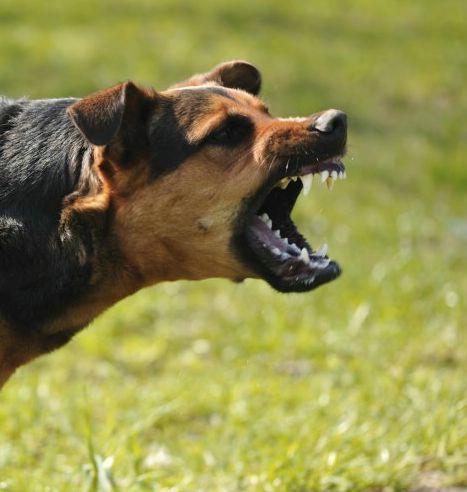 Rabac: 62-godišnjakinju napala dva psa - prekršajni nalozi vlasnicima