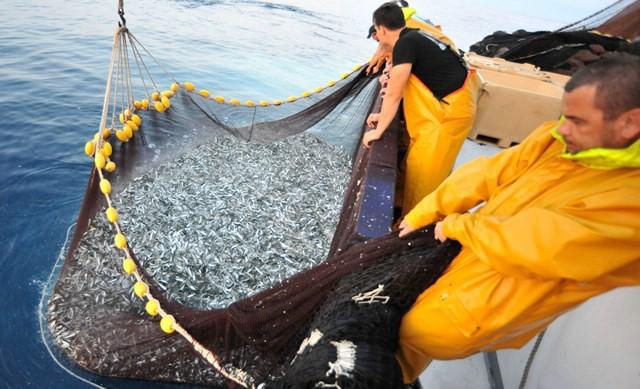 Susret ribara u Rapcu: Stanje u Jadranu - katastrofalno!