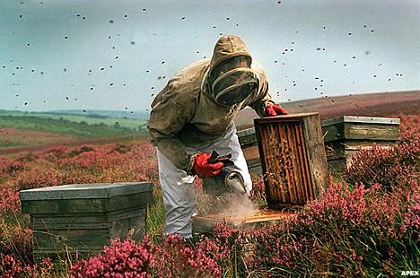 Predavanje za pčelare