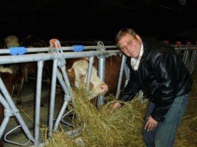 Krave konačno na farmi u Čepiću!