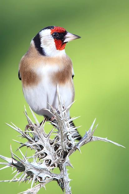 Optužen zbog lova zaštićenih ptica