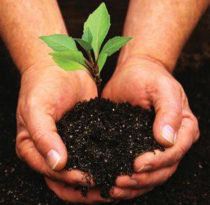 Grad Labin povodom «Dana planete zemlje» daruje sadnice
