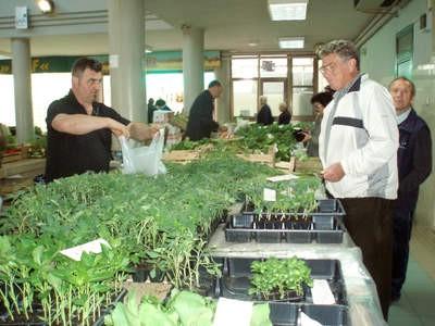 Đir po labinskoj tržnici: Vrijeme od sadnica