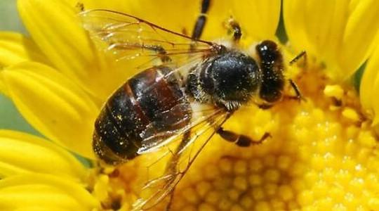 Obavijest pčelarima
