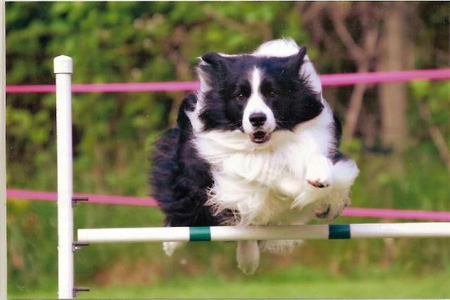 Poznati zagrebački instruktor gostuje na treningu pasa u Labinu