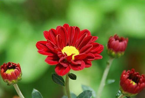 """""""Prvi maj""""  organizira prodaju cvijeća na grobljima"""