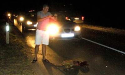 U trostrukom sudaru razbili aute zbog srne, Labinjan zaradio prekršajnu prijavu