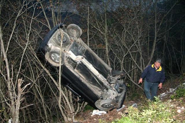 Autom se popela na drvo i nije se ni ogrebala!