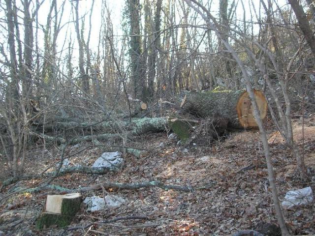 Općina Raša: sječa, pustošenje i  krađa drva u Cerovici (pismo čitatelja)