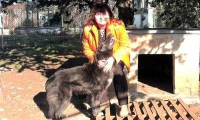 Zbog bjesnoće na Labinštini: napušteni psi opet na cesti