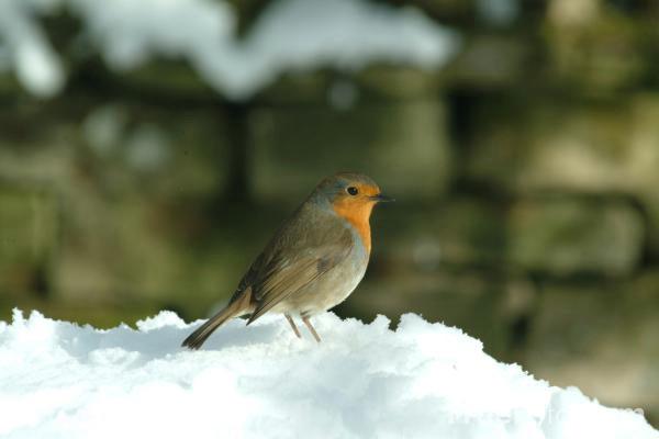 Posljednji udar: U Istri jaka bura, moguć i snijeg